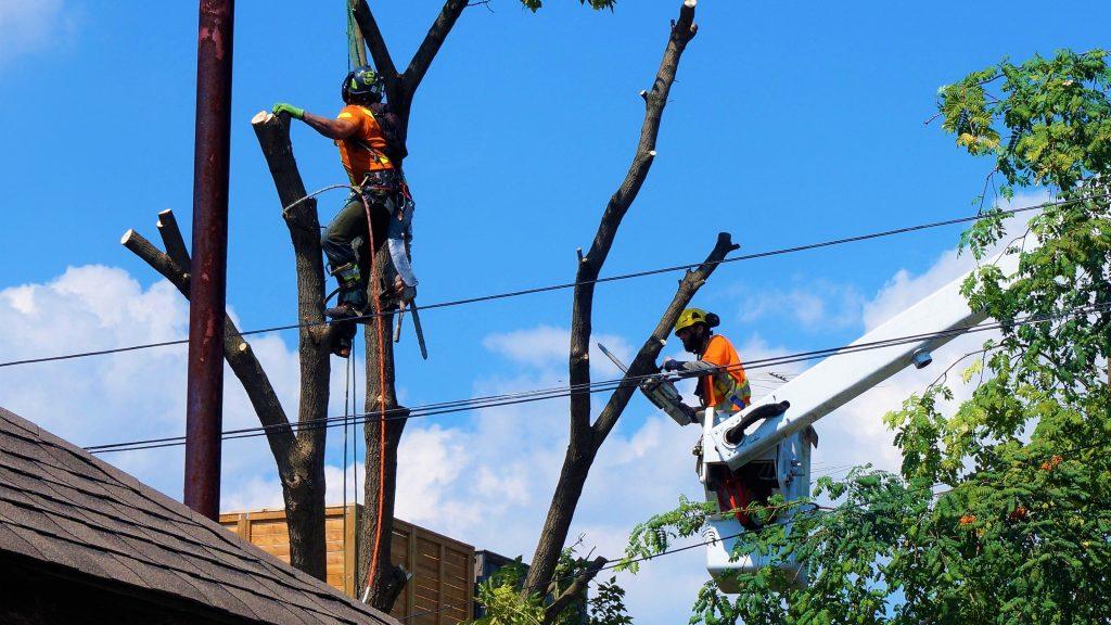 Ajax Tree Services