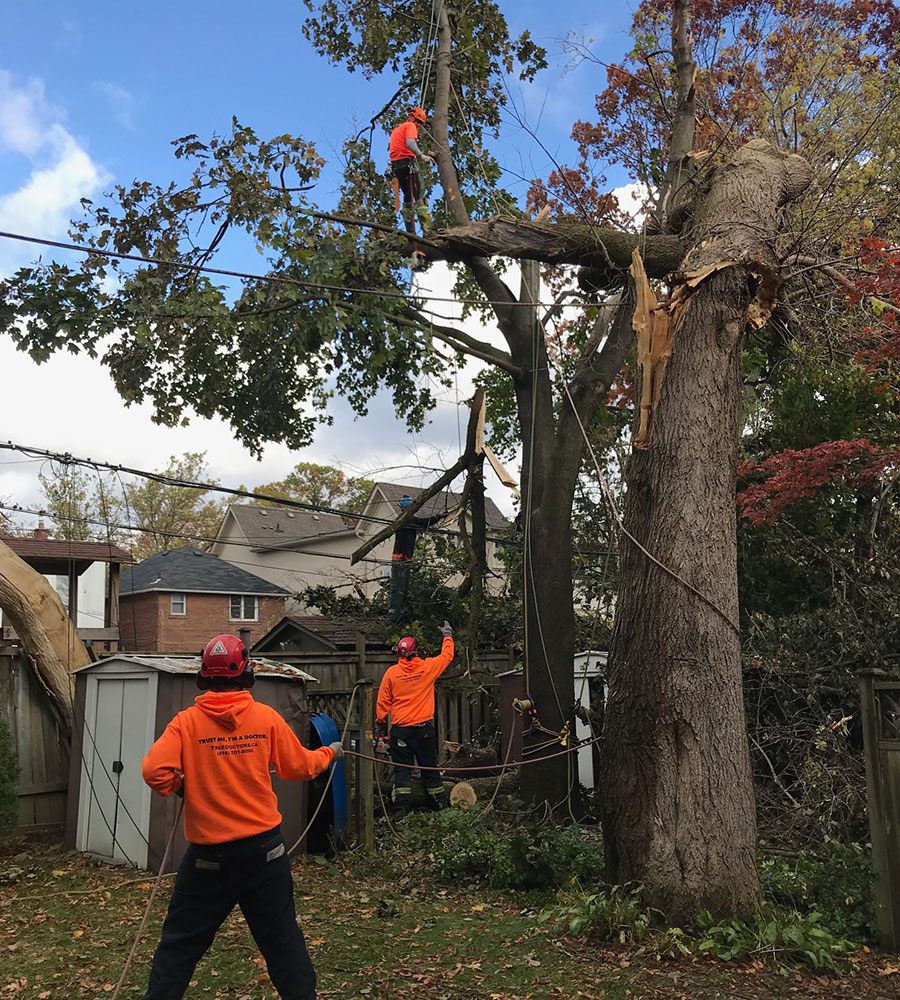 Tree Removal in Ajax, ON